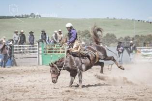 Saddle Bronc_12