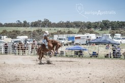 Saddle Bronc_5