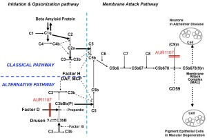 The Complement System – Aurin Biotech