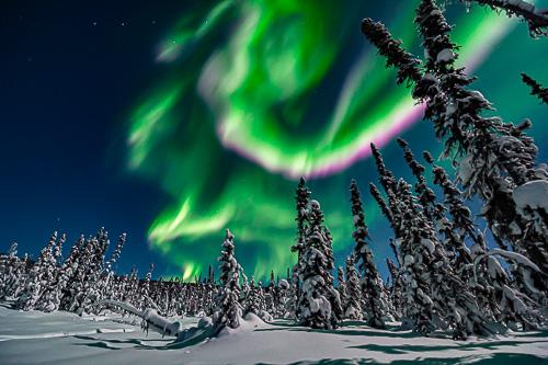 magic Aurora