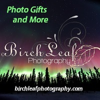 Birch Leaf Photography