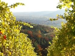 Thüngersheim im Herbst