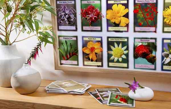 APC001: Flower Insight Cards (Set of 69)