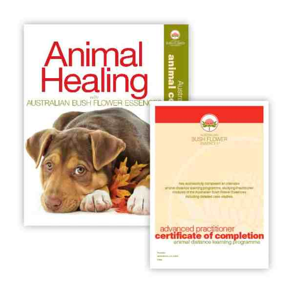 Animal Healing Correspondence Course