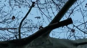 Trees - full zoom