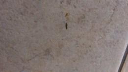 Mosquito - Close
