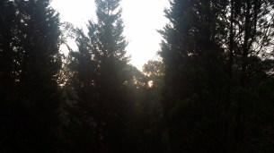 Sunset (behind some trees)