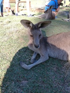 G'day mate