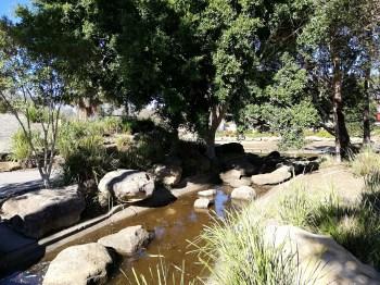 Pond lake @ Nurragingy Reserve
