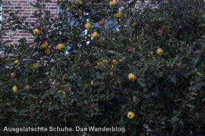 Äpfel am Obstweg Leichlingen