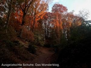 Herbst im Witthausbusch