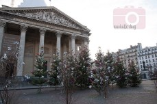 Christmas trees in front of the Pantheon