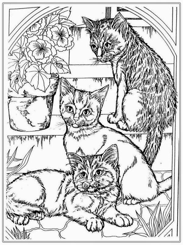 Katzen Ausmalbilder Für Erwachsene Kostenlos Zum Ausdrucken