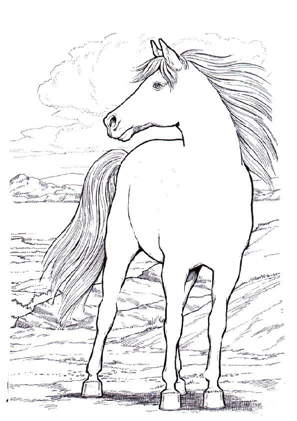 Ausmalbilder Pferde 10 Ausmalbilder Kostenlos