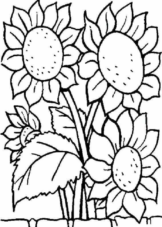 Ausmalbilder Blumen 1 Ausmalbilder Kostenlos