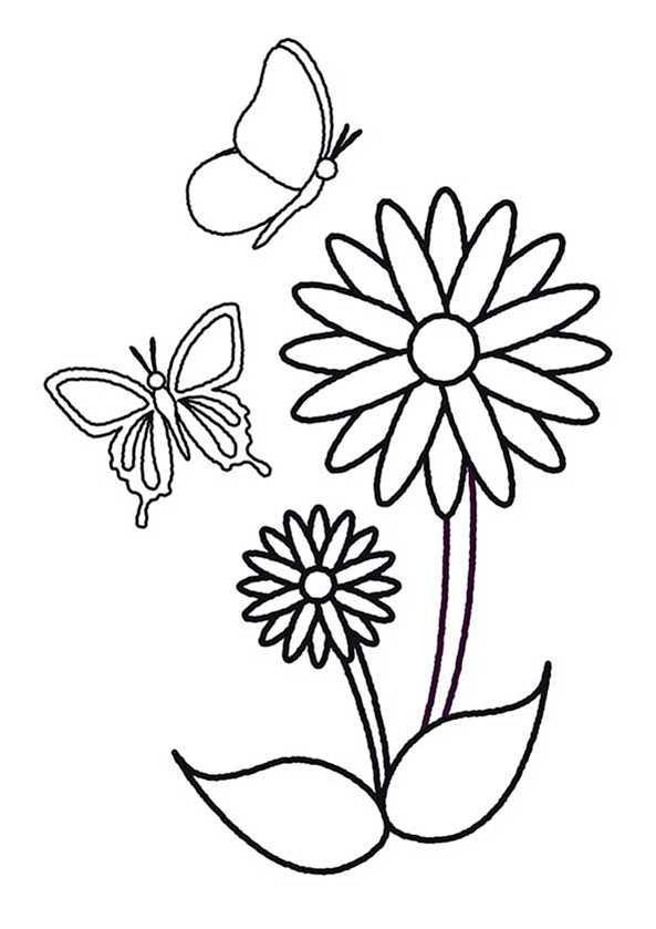 Schmetterling 4 Ausmalbilder Kostenlos