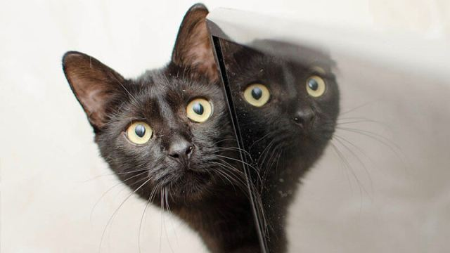 image shows a cat looking at a screen with its mirror image reflected back