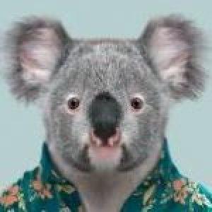 Profile photo of fluffykoala