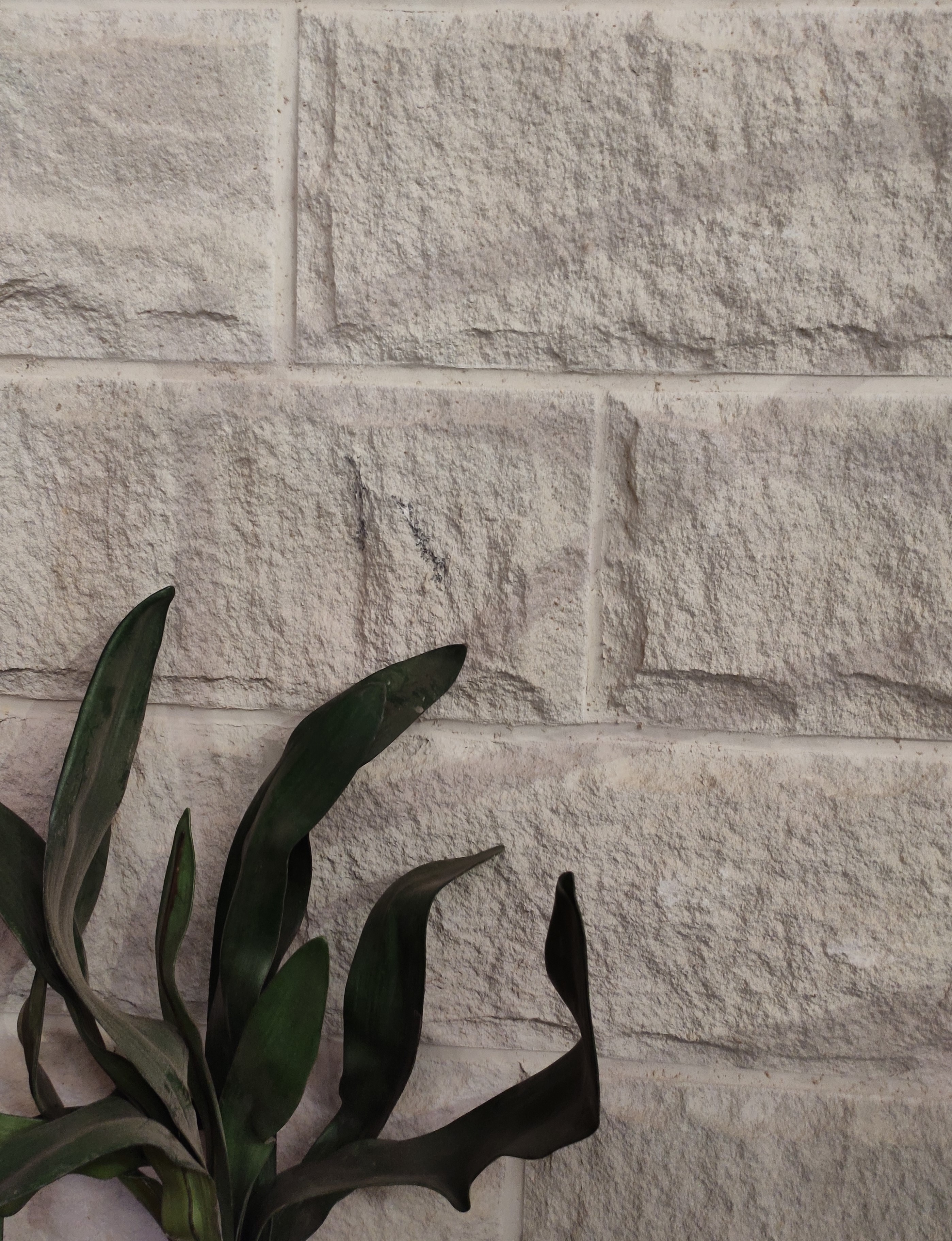 Aussietecture Rockface sandstone wall veneer on display with a green plant