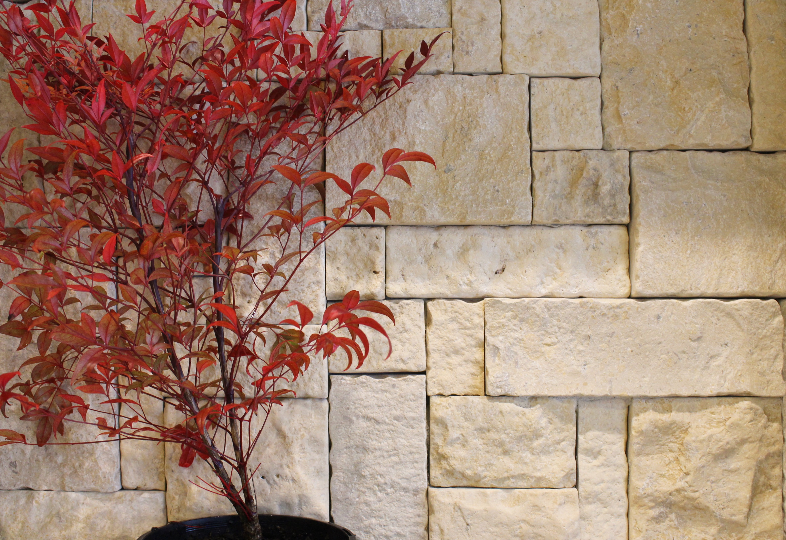 Feature wall design using Colonial Simpson stone wall claddings with a maple tree