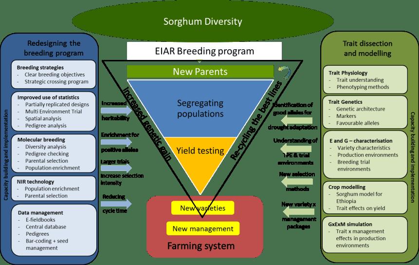 BMGF-Sorghum-Diversity