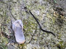 Einer kleinerer Wurm