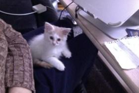 Tipsy lap