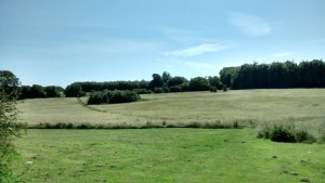 The footpath is visible through the field