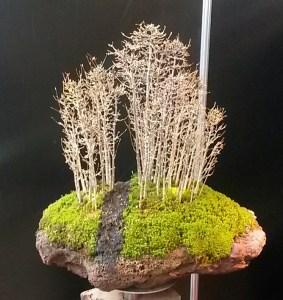 """Ganz besondere Bonsais bei den """"Gartenträumen"""" Hallen am Gleisdreieck"""