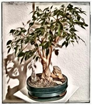 Bonsaifotospaß Bild 01