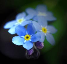 2016-05-16_Blume_04