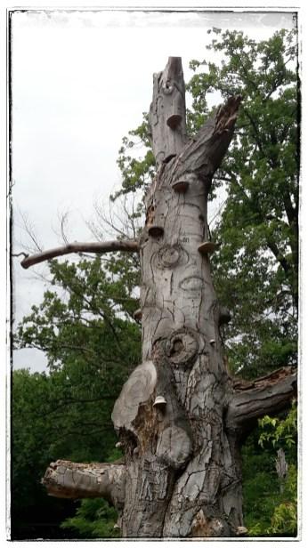 Morbider Baum, hat was.... oder?