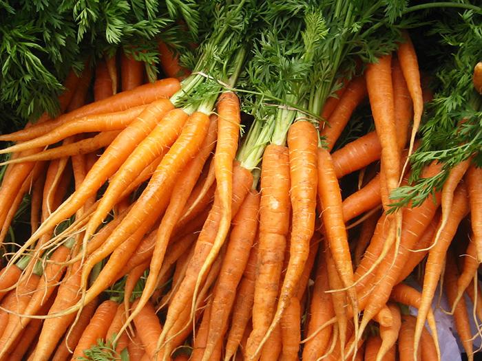 carrots rabbit food