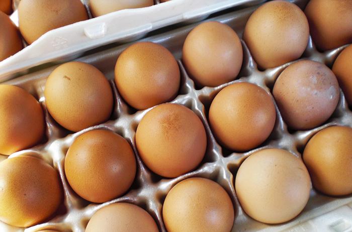 chicken farm fresh duck eggs bird