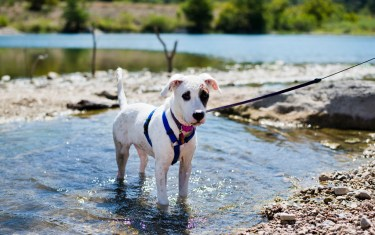 Six Awesome Austin Parks With Trails Where Dogs Can Run Free