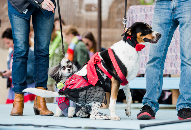 fifty shades of grey costume contest dogs