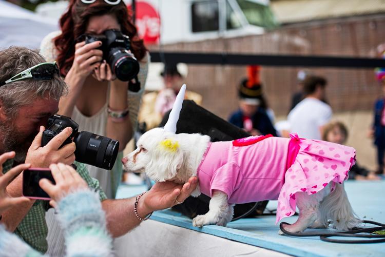 unicorn photographers cameras attention seeker