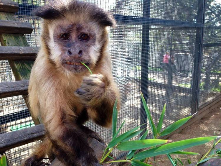 Photo: Courtesy, Austin Zoo & Animal Sanctuary on Facebook.