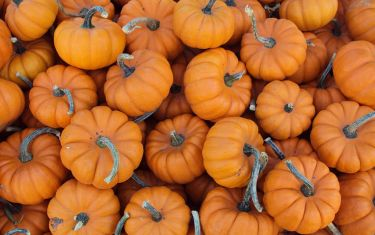 5 Delightful Pumpkin Patches To Explore In Austin