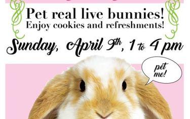 Easter Bunny Bonanza