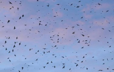 Purple Martin Parties!