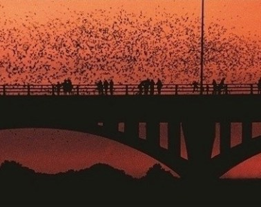 Photo via Bat Conservation International on Facebook.