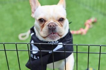 SXSW Dog