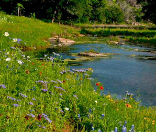 Major Allergy Seasons In Central Texas