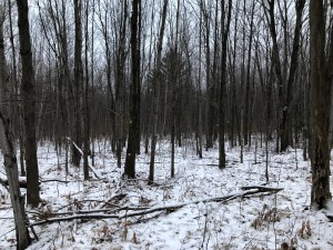 Land for sale