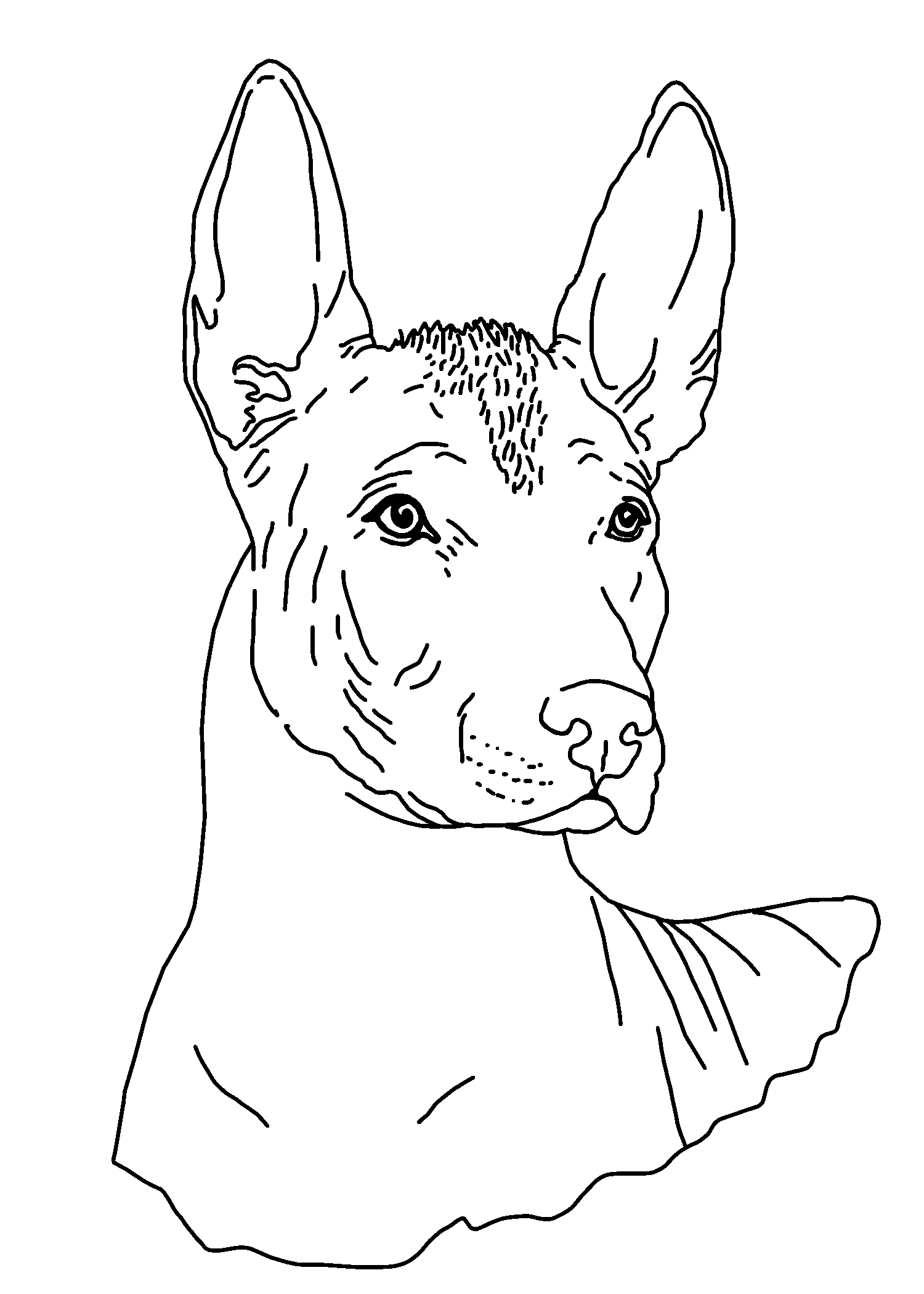 Mirror Extra Large Austonley Irish Wolfhounds