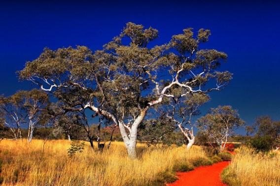 """Karijini National Park WA"" by Donna Colliver"