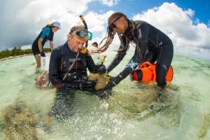 澳洲 昆士蘭科技大學 QUT 科學家為大堡礁珊瑚訂製無人機協助復育,珊瑚蟲存活率可達100倍以上- • 澳洲留學網 - 傑瑞斯留學代辦