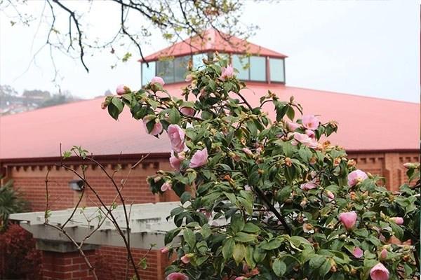 塔斯馬尼亞公立學校 Tasmania Government School - 澳洲中小學