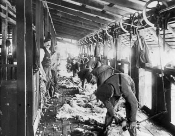Australian Shearing History